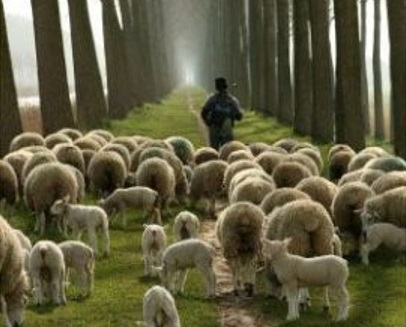 I don't want to be your shepherd.